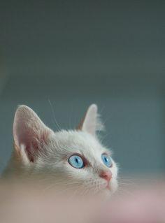 ラブリー·KittyCats、catp0rnは:Flickrのの上でルックアップ