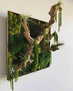 Moss Wall Art, Moss Art, House Plants Decor, Plant Decor, Air Plants, Indoor Plants, Garden Art, Garden Design, Bird Design