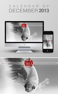 "For the last month of the year 2013, I shoot a fighter fish. In my country they call it ""Cupang"". Wallpaper calendar of December 2013 from iBrandStudio"
