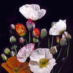 Poppy Bunch can be printed onto canvas, fine artpaper or wallpaper.