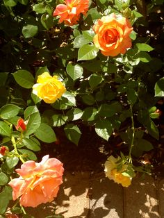 roses...~House of History, LLC.