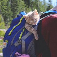 Kitties love hiding in your suitcases, luggage, backpacks and travel sacks!