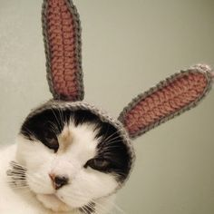 Knitted bunny ears for cats