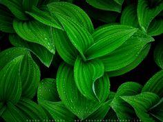 Fondo vegetal. Flipboard