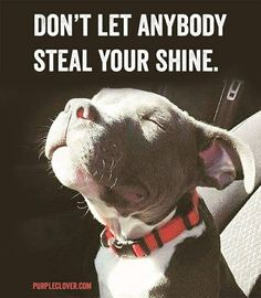 This is such a beautiful quote, and so much more sweet with the puppy face!