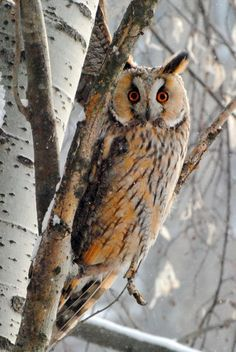Photo by Vadym Borysenko ~ LOVE owls! Three live across the street!