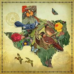 Texas flowers picture