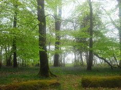 forests of ireland   Recent Photos The Commons Getty Collection Galleries World Map App ...