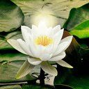 flower of compassion