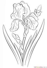 Image result for how to draw Monet's blue iris flower