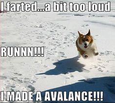 animal humor | Animal Humor dog funny