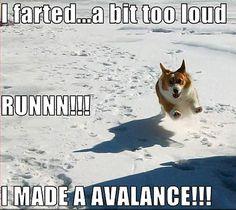 animal humor | Animal Humor dog funny