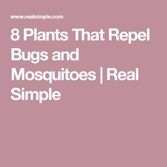 8 Plants That Repel Bugs and Mosquitoes | Real Simple