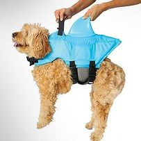 If your dog can't swim, you should suit him up in this shark life jacket before letting him clamber up on the pool raft. | 41 Insanely Clever Products Your Dog Deserves To Own