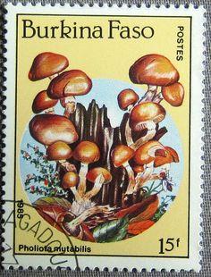 Pholiota mutabilis 1985 Burkina Faso
