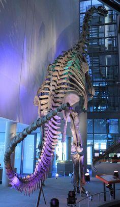 WLANL_-_Urville_Djasim_-_Camarasaurus.jpg (743×1280) - Dinosauria, Saurischia, Sauropodomorpha, Sauropoda, Eusauropoda, Neosauropoda, Macronaria, Camarasauridae. Auteur : Urville Djasim, 2009.