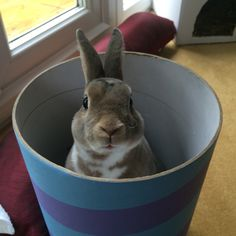 Alfie the rabbit