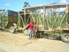 Sugar plantations, s