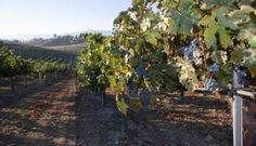 Touring Texas Wine Country, top wine destination for 2014