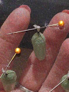 butterfly garden How to a Rehang Monarch Chrysalis in a mesh pop-up cage Monarch Butterfly Habitat, Butterfly Cage, Butterfly Garden Plants, Butterfly Feeder, Butterfly Life Cycle, Butterfly House, Monarch Caterpillar, Diy Garden Projects, Garden Ideas