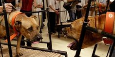 petition: Animal Torture is Not Art