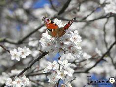 Pracht vlinder in de lente