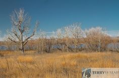 """Panorama"" Landscape image of bare trees and yellow grasses along the Platte River Nature Area in Nebraska."