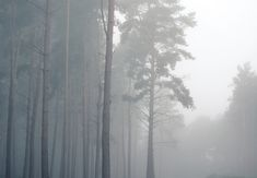 Autumn mist, Severals Woods near Midhurst in Sussex First Photo, Mists, Woods, My Photos, Trees, Autumn, Outdoor, Outdoors, Fall