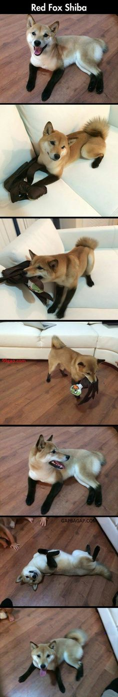 #FunnyPictures Of A Fox vs. Toy #funnyanimals