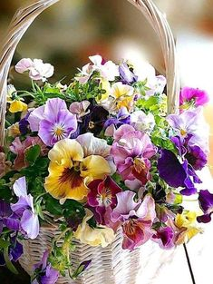 Basket of pansies and other flowers. Rare Flowers, Amazing Flowers, Fresh Flowers, Spring Flowers, Beautiful Flowers, Basket Of Flowers, Exotic Flowers, Purple Flowers, Beautiful Flower Arrangements