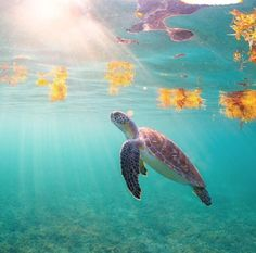 #bemoreturtle Turtle, This Is Us, Adventure, Animals, Sodas, Turtles, Animales, Animaux, Tortoise