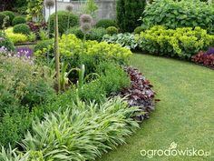 small shrubs for garden borders Drought Resistant Plants, Garden Borders, Plants, Home Vegetable Garden, Front House Landscaping, Beautiful Gardens, Patio Plants, Ornamental Grasses, Lawn And Garden