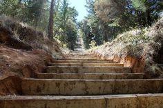 El Ayuntamiento de Pátzcuaro inició los trabajos de mantenimiento al acceso y mirador del Estribo Grande, con la finalidad que los turistas y deportistas que acudan a este emblemático lugar ...
