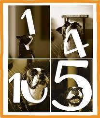 Wedding table numbers with your dog..On this one, they've photo shopped the numbers in! LOVE THIS IDEA!!!