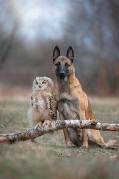 Side by side ... by Tanja Brandt on 500px ......Friends....:)