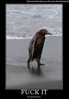 Animal Posters | Sad animal – Demotivational poster | Demotivational Posters Gallery ...