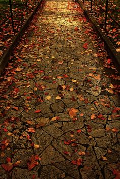 rome. autumn leaves. bahus.  original source: http://flickr.com/photos/herny_bahus/2060771868/