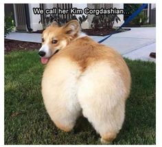 Funny Animal Pictures Of The Day 23 images - Funny Dog Quotes - Funny Animal Pictures Of The Day 23 images The post Funny Animal Pictures Of The Day 23 images appeared first on Gag Dad. Animal Humour, Funny Animal Photos, Funny Animal Jokes, Baby Animals Pictures, Funny Dog Memes, Cute Memes, Funny Animal Videos, Funny Animal Pictures, Pictures Of Dogs