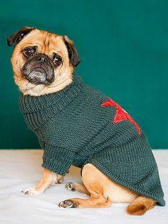 Pug in an ugly Christmas sweate