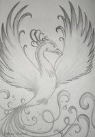 Phoenix by sahfofa small version