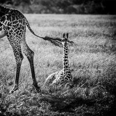 Africa 2013 by Laurent Baheux