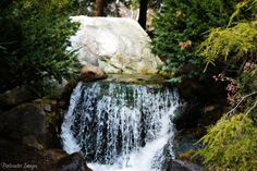 One of the many beautiful spots at Dow Gardens in Midland,MI