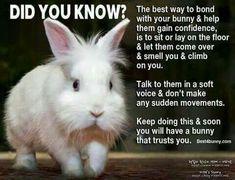49 Best ideas for pet rabbit cage chinchillas Pet Bunny Rabbits, Dwarf Bunnies, Pet Rabbit, Bunny Toys, Bunny Bunny, Bunny Cages, Rabbit Cages, Chinchilla, Bunny Care Tips