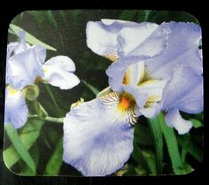Shabby Chic Mousepad measuring a generous 7.75 x by PamsFabPhotos