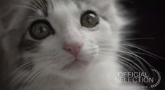 Mini-Movie about Pet Adoption Wins Catdance Film Festival