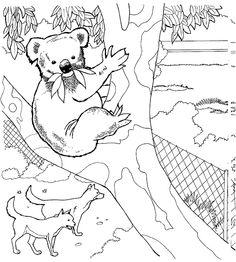 coloring page koala bears koala bears