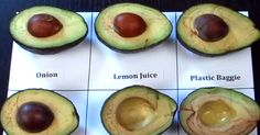 Now this picture is something else... Put avocados in a tubberware container with some onion slices for best results.
