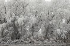 Frozen Trees by dynax111 #nature #mothernature #travel #traveling #vacation #visiting #trip #holiday #tourism #tourist #photooftheday #amazing #picoftheday