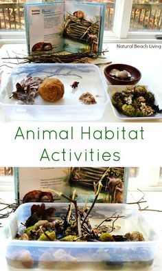 The Perfect Animal Habitat Activities for Preschool, STEM, Building animal habitats, Reggio Emilia Provocations, Sensory bins, Early Childhood Education