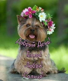 Good Day, Animals And Pets, Dogs, Cards, Buen Dia, Pets, Good Morning, Hapy Day, Pet Dogs